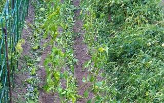 cultivos afectados tormentas